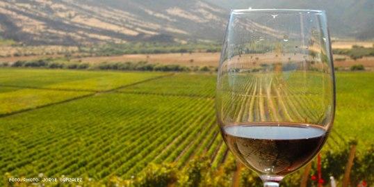 vino-argentina